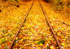 Railway in  the autumn forest Stock Photos