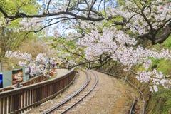 Railway and Cherry tree blossom at Alishan National Scenic Area. Taiwan stock photography
