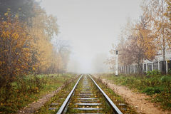 Railway in the fog going to perspective, golden leaves of the forest Royalty Free Stock Photos