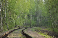 Railway in a forest Royalty Free Stock Image