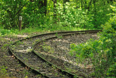 Railway in forest Stock Image
