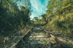 Railway in forest royalty free stock image