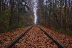 Railway in the forest stock photos