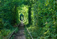 Railway through the forest. Tunnels of love Royalty Free Stock Images