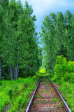 Railway in the forest. Single-track passing through the birch grove Stock Images
