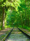 Railway in the forest Stock Images