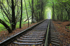 Railway in forest Stock Photo