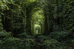 Natural tunnel of love formed by trees. Ukraine royalty free stock image