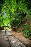 Railway in the jungle. Abandoned railroad in the jungle stock photo