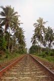 Railway through the jungle. Evening scenery in Sri Lanka. Royalty Free Stock Photography