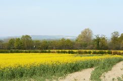 Railway line crosses through a field of yellow oilseed rape royalty free stock photography