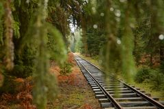 Tracks in the green forest