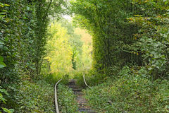 Railway line makes a right turn and hides in the trees. Tunnel of love - wonderful place created by nature Royalty Free Stock Photos