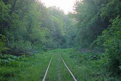 Railway line passing through the forest Royalty Free Stock Photos