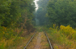 Railway line passing through the forest. Railway line passing through the quiet forest Royalty Free Stock Photo
