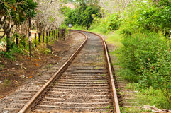 Railway line passing through the green plants Royalty Free Stock Images