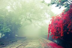 Railway in mist Stock Image