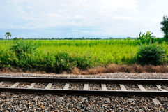 Railway near the paddy filed Royalty Free Stock Image