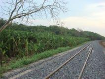 Railway pass through the field at Saraburi Stock Photos
