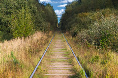 Railway perspective in the forest Royalty Free Stock Photography