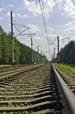 The railway through the pine forest Royalty Free Stock Photography
