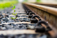 Railway and plant Royalty Free Stock Photography