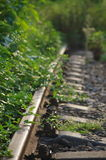 Railway and plant Royalty Free Stock Image