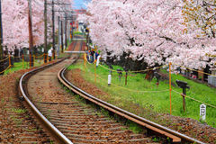 Railway and sakura tree Stock Images