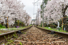 Railway and sakura tree stock photography