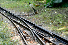 Railway switches and crossings. On small locomotive track Royalty Free Stock Photo