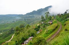 Railway through tea plantations Stock Photography