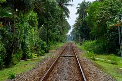 Railway to the jungle. The railway among the jungle royalty free stock image