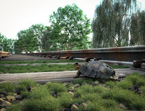 Railway track crossing rural landscape and turtle. Stock Image
