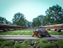 Railway track crossing rural landscape and turtle. Royalty Free Stock Image