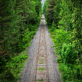 Railway track through a green forest Stock Photos