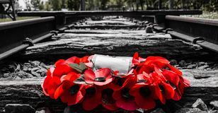 Railway track remembrance Poppy Reef royalty free stock photo