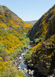 Railway track up Taieri Gorge New Zealand Stock Images