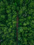 Railway tracks in forest Royalty Free Stock Photo