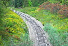 Railway tracks in forest curving left Stock Image