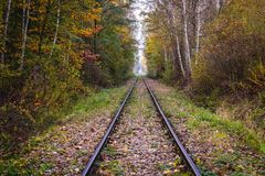 Railway tracks in forest. Railway tracks in nature reserve in Warsaw, Poland stock image