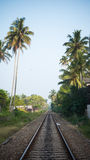 Railway tracks in jungle sri lanka Royalty Free Stock Images