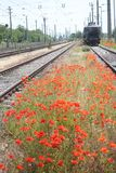 Railway tracks and poppy flowers Royalty Free Stock Photo