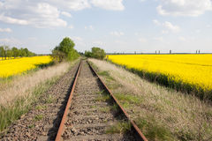 Railway tracks and yellow rape fields. Old and unused railway tracks in Germany are framed by yellow blooming rape fields Royalty Free Stock Image