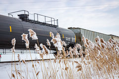 Railway Train in Winter With Frozen Cattails Royalty Free Stock Image