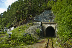 Railway tunnel. Among trees and poles Stock Images