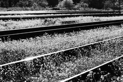 Railway and white flowers of a shepherd`s bag Capsella Royalty Free Stock Photography