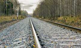 Railway in the wild autumn forest Royalty Free Stock Image