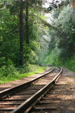 Railway in wood Royalty Free Stock Photos