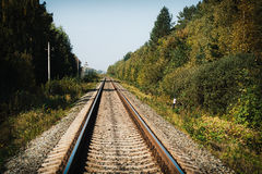 Railway in the woods. Railroad tracks through the forest stretches into the distance Royalty Free Stock Photography