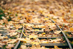 Railways autumn leaves Stock Photos
